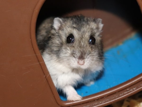 Hamsterhilfe Südwest Dr. Oetker