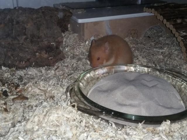 Hamsterhilfe Südwest Idgie