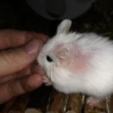 Hamsterhilfe Südwest Annegret