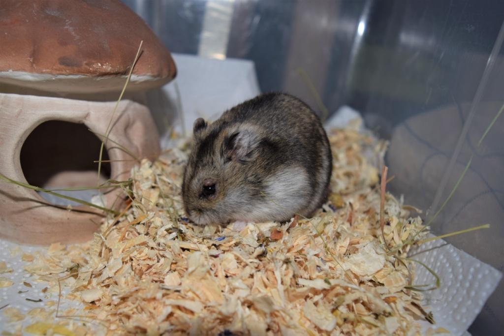 Hamsterhilfe Südwest Hybrid