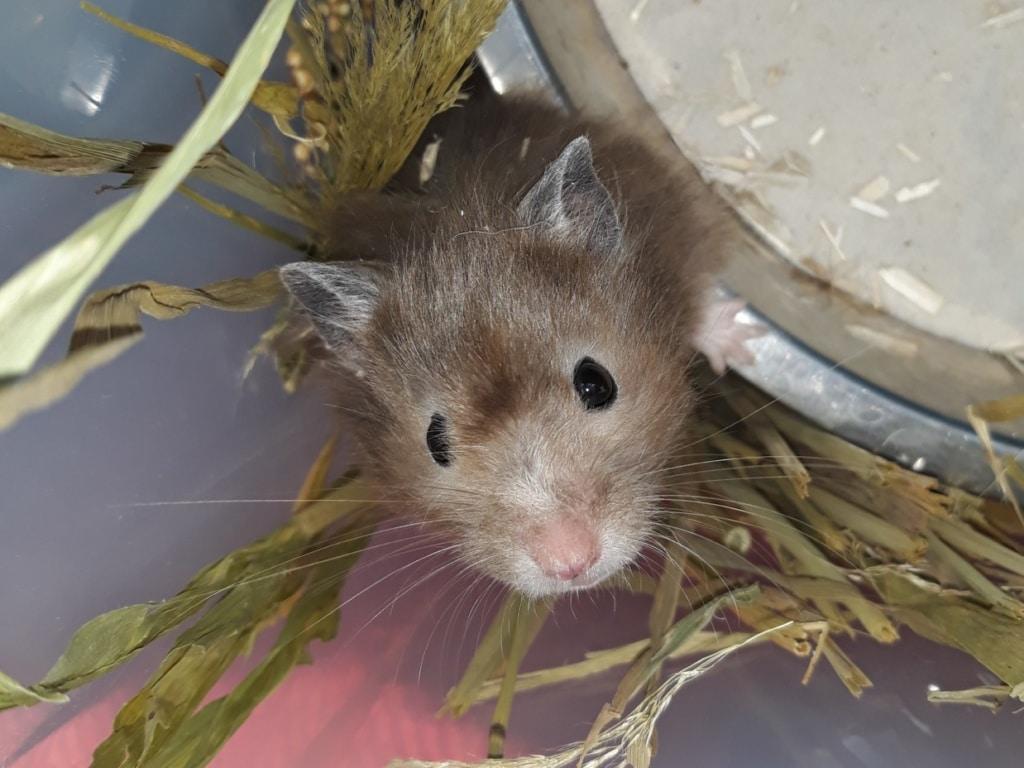 Hamsterhilfe Suedwest Motzi
