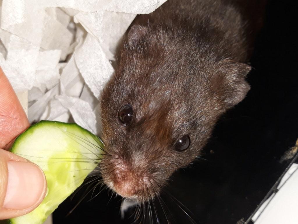 Hamsterhilfe Suedwest Moony