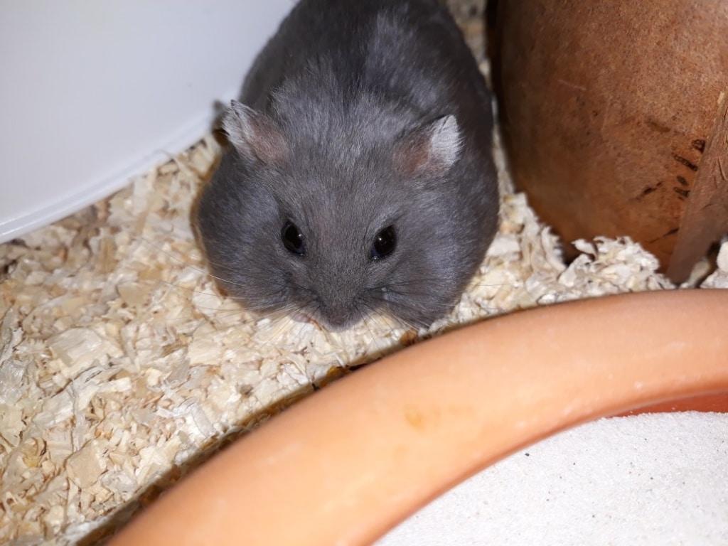 hamsterhilfe suedwest hiro