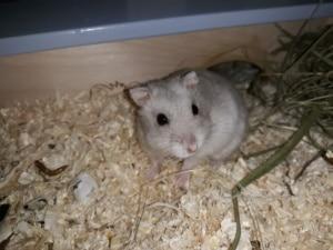 hamsterhilfe suedwest wanda