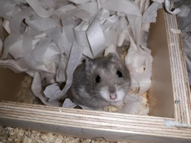 hamsterhilfe suedwest wonder