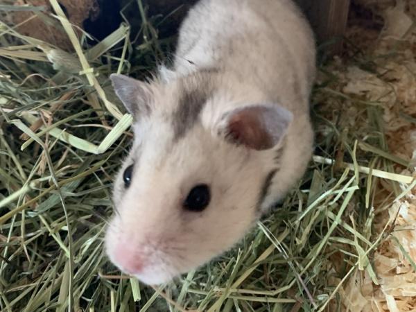 Hamsterhilfe Südwest Konsti