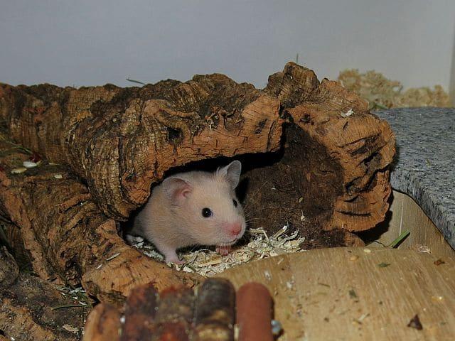 Hamsterhilfe Suedwest