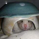 Hamsterhilfe Suedwest Thalia