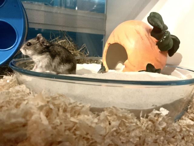 Hamsterhilfe Südwest Mulf