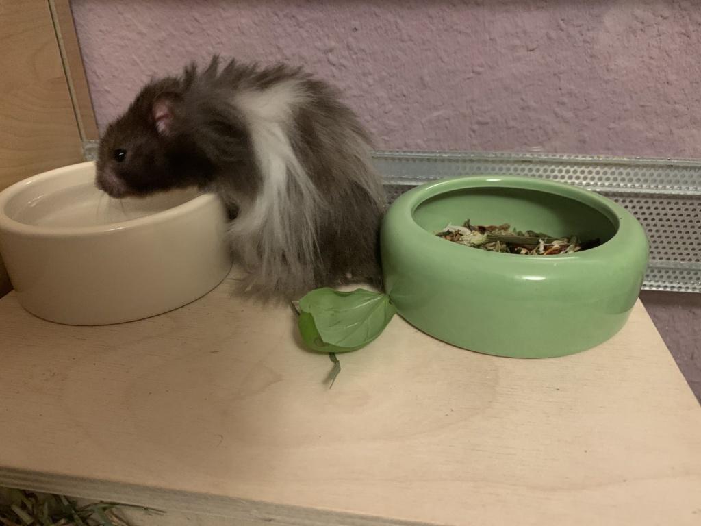 Hamsterhilfe Südwest Percy