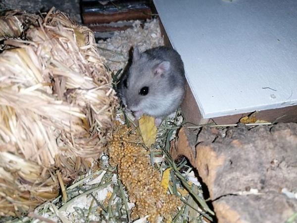 Hamsterhilfe Südwest