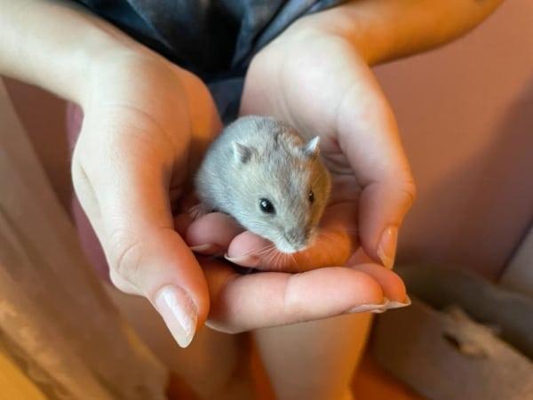 Hamsterhilfe Südwest Snöfrid