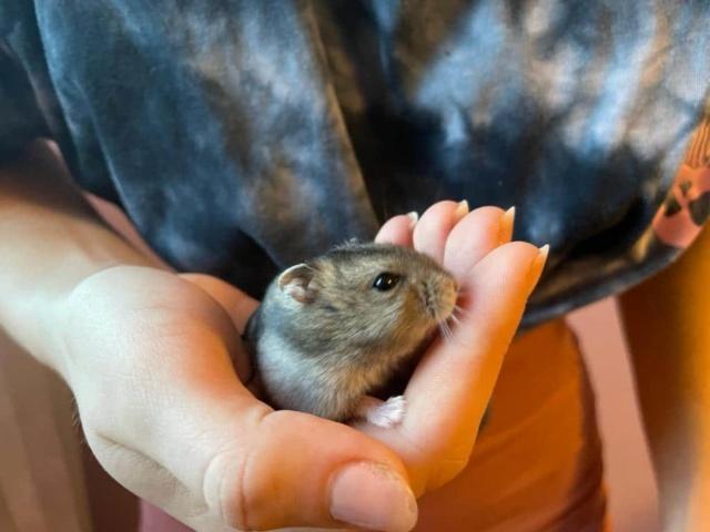 Hamsterhilfe Südwest Siegbert