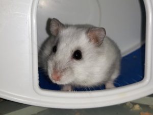Wicca Hamsterhilfe Suedwest