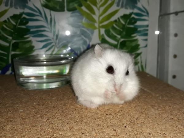Wishnu Hamsterhilfe Suedwest
