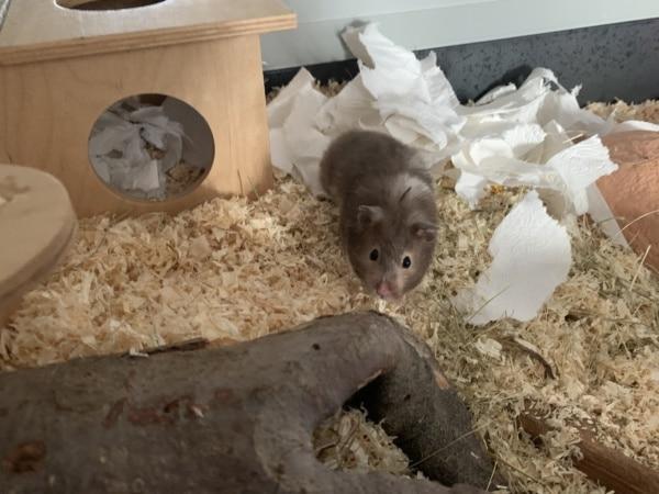 Hamsterhilfe Südwest Frauke