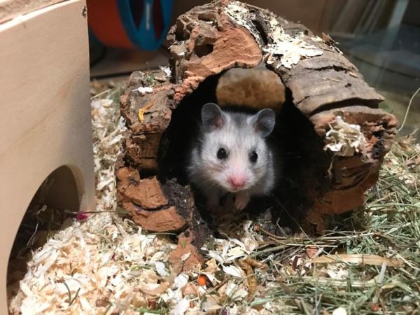 Hamsterhilfe Südwest Muggel