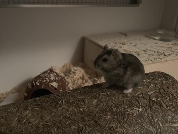 Hamsterhilfe Südwest Romana