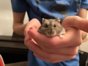 Hamsterhilfe Südwest Rala