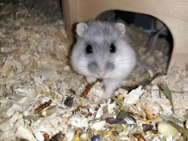 Bamo Hamsterhilfe Südwest