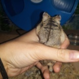 Omama Hamsterhilfe Suedwest