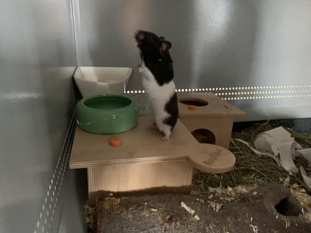 Hamsterhilfe Südwest Hilla
