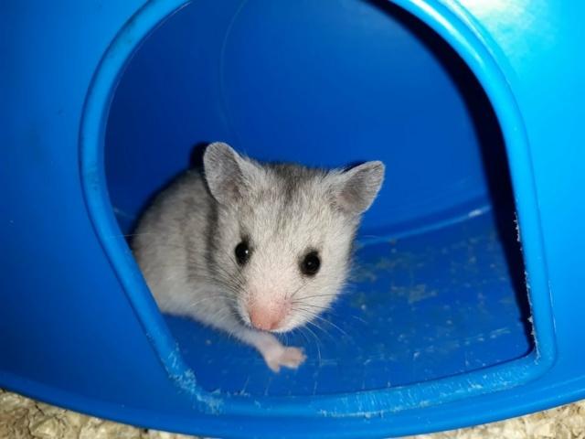 Onika Hamsterhilfe Südwest