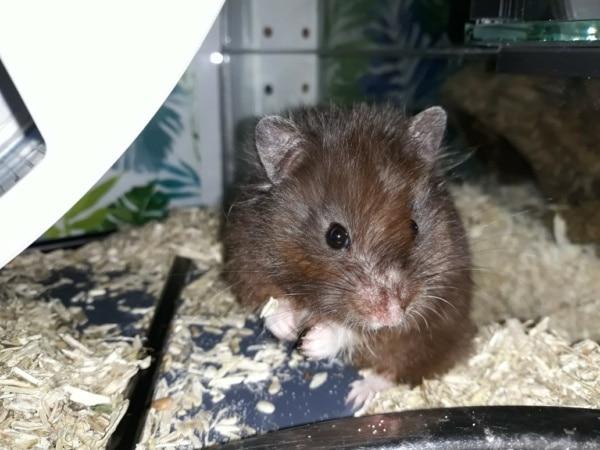 Kadabra Hamsterhilfe Südwest