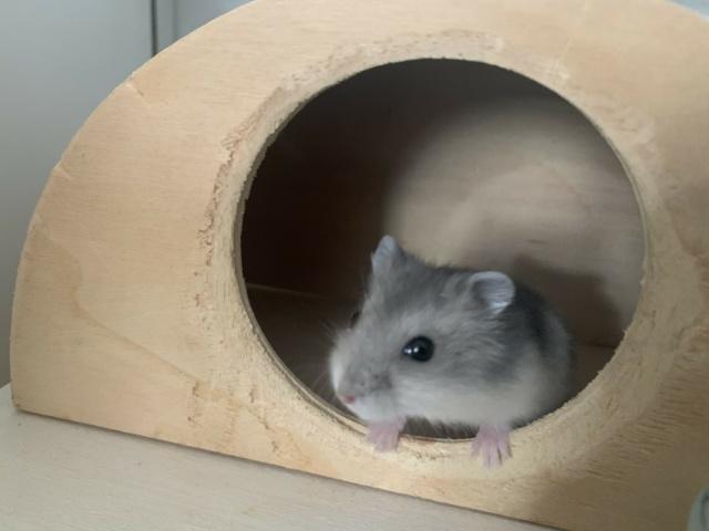 Hamsterhilfe Südwest Nosy