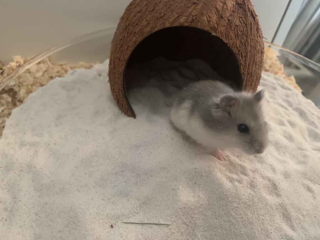Hamsterhilfe Südwest Naimi