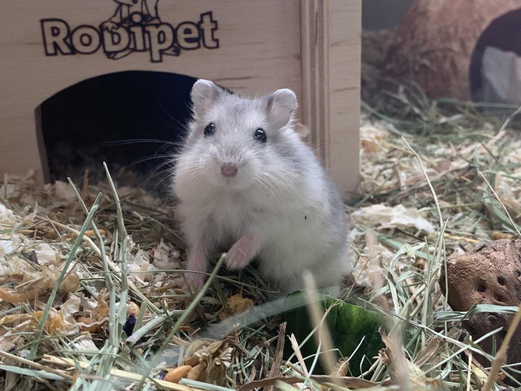 Hamsterhilfe Südwest Nelson