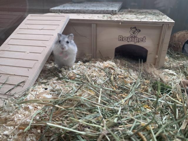 Hamsterhilfe Südwest Nilo