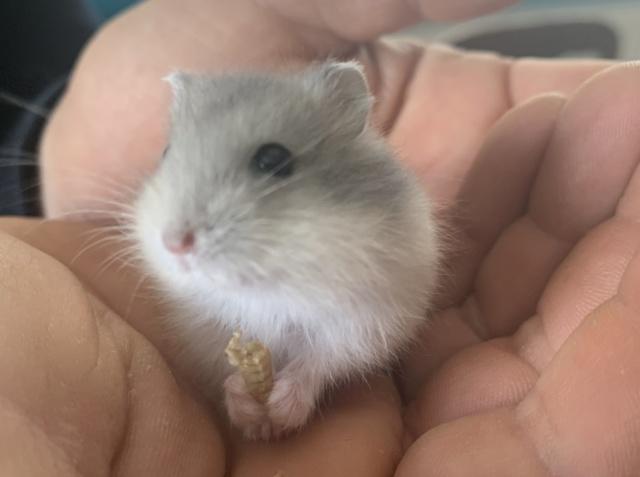Hamsterhilfe Südwest Nelani