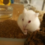 Schiggy Hamsterhilfe Südwest