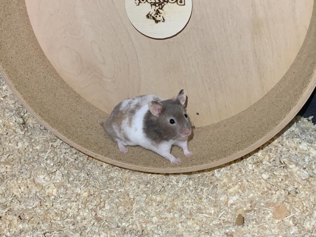 Hamsterhilfe Südwest Gladys