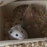 Hamsterhilfe Südwest Junes Kinder