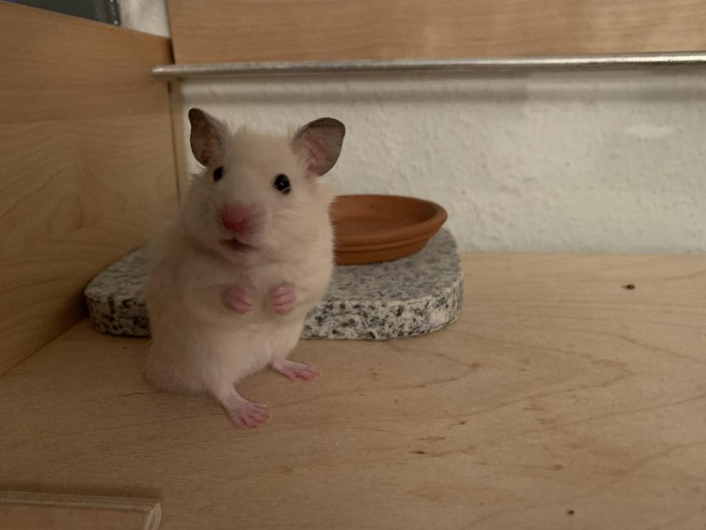Hamsterhilfe Südwest Fenton
