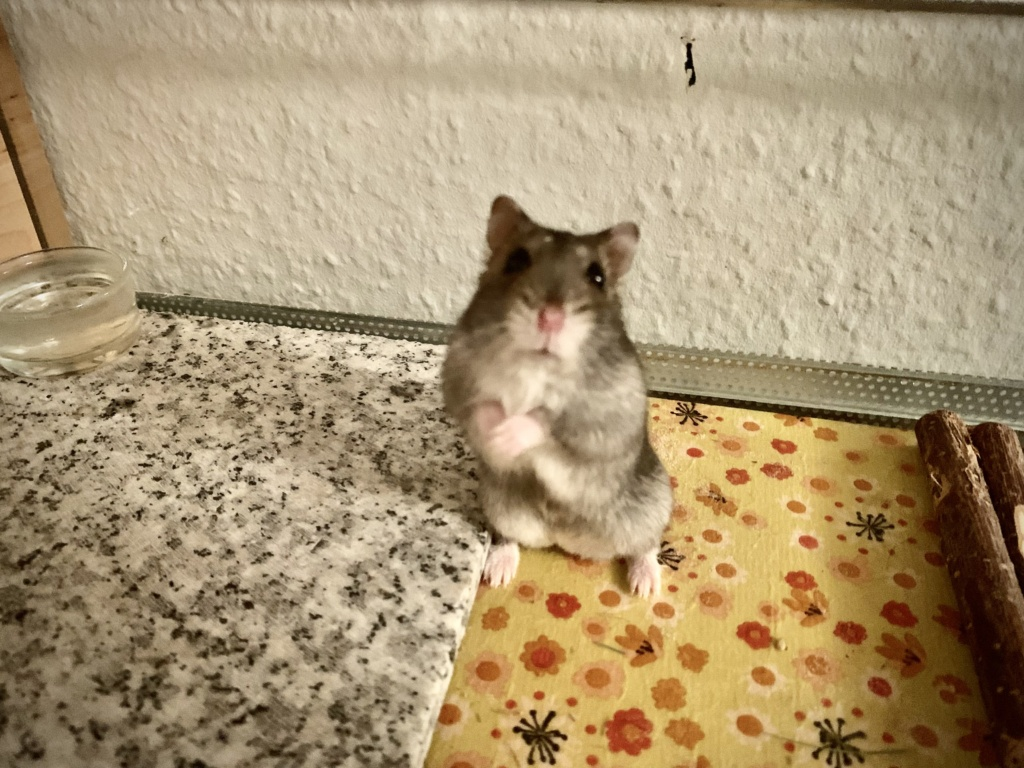 Hamsterhilfe Südwest Florin