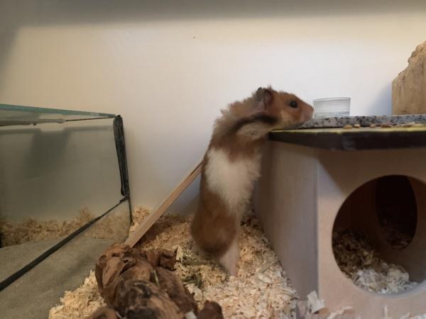 Hamsterhilfe Südwest Waris