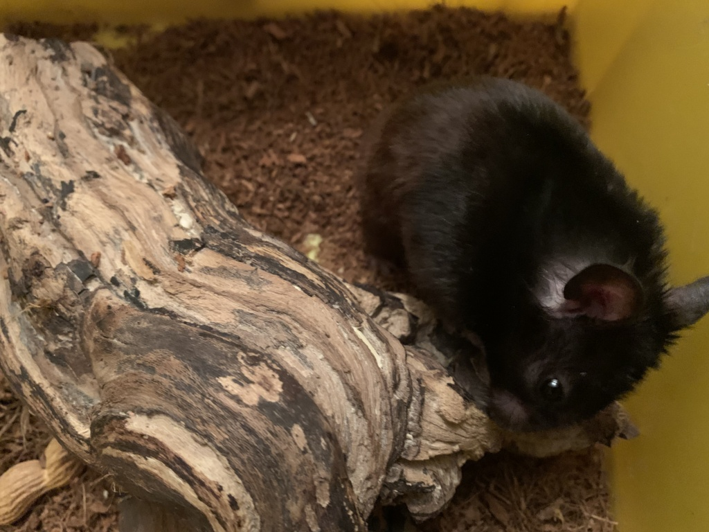 Hamsterhilfe Südwest Roger
