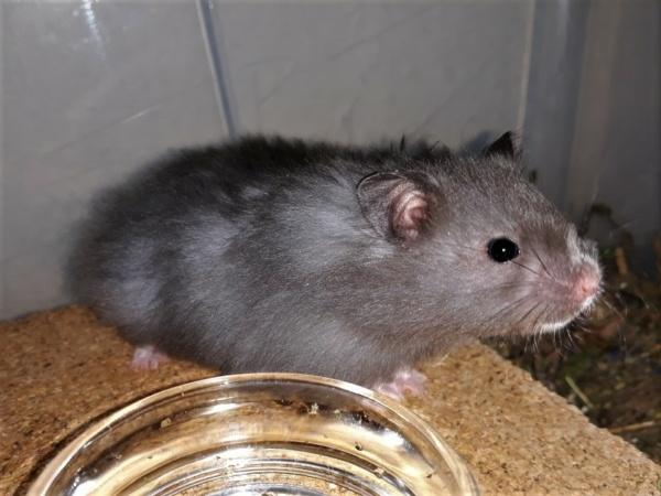 Hamsterhilfe Südest Masahiro