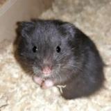 Hamsterhilfe Südest Misaki