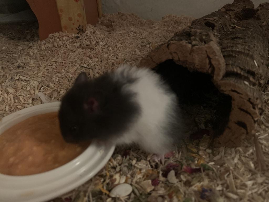 Hamsterhilfe Südwest Emerson
