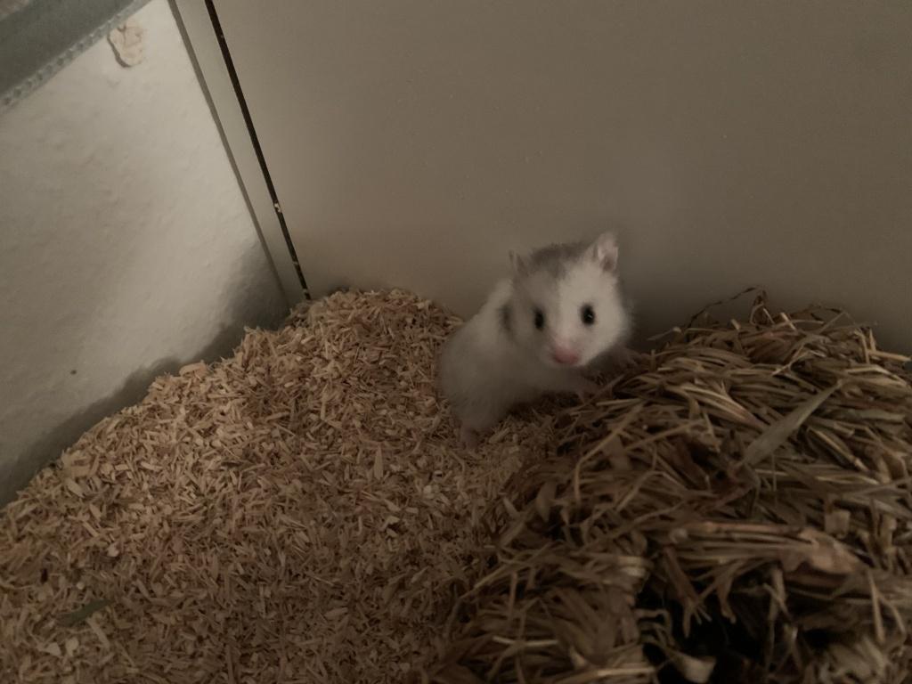 Hamsterhilfe Südwest Effi