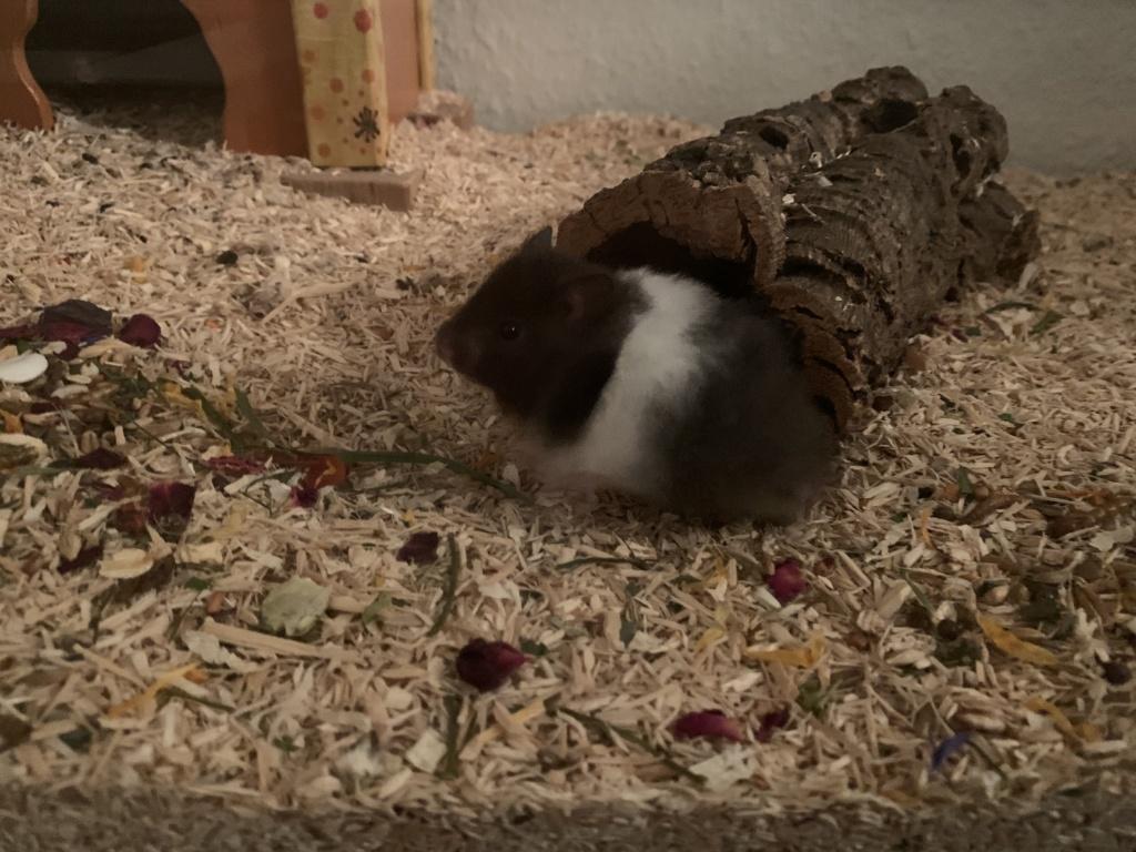 Hamsterhilfe Südwest El Hadji
