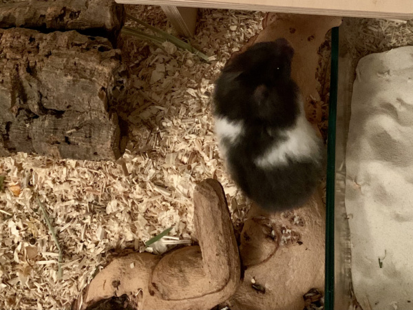 Hamsterhilfe Südwest Eik