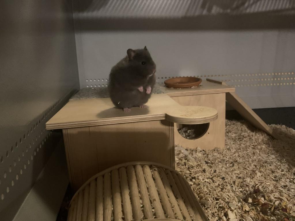 Hamsterhilfe Südwest Elanor
